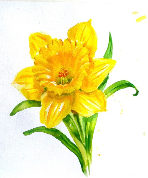Yellow daffodil watercolor