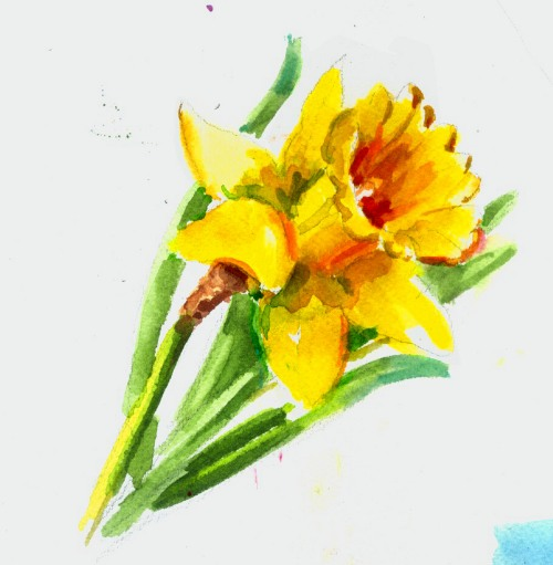 small painted daffodil
