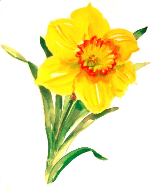 Yellow and orange watercolor daffodil